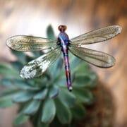 Glass_Elizabeth_Welch_hanging_dragonfly_DAP