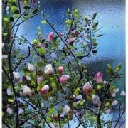 Glass_Abi_Street_Magnolias