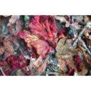Textile Art - Heather Collins - Colours of Autumn Maple
