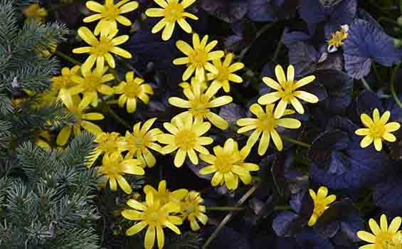 Darren Ball Garden Sanctuary - photo inspiration celendine