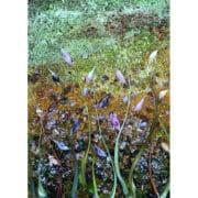 Glass-Abi-Street-Detail-South-Downs-Grasses-series_bh